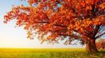 2059-fall-tree-800x600