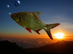 fish sky